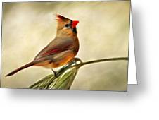 Winter Cardinal Greeting Card by Christina Rollo