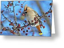 Winter Colors.. Greeting Card by Nina Stavlund