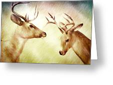 Winter Deer Greeting Card by Bob Orsillo