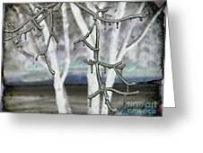 Winter Diffused Greeting Card by Arlene Carmel