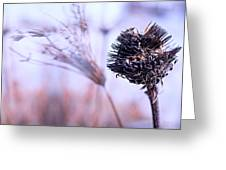 Winter Flowers  Greeting Card by Bob Orsillo