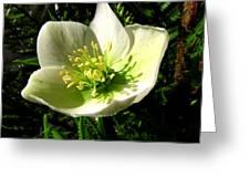 Winter Flowers Greeting Card by Joyce Woodhouse