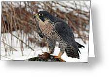 Winter Hunt Peregrine Falcon In The Snow Greeting Card by Inspired Nature Photography Fine Art Photography