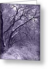 Winter In Purple Greeting Card by Carol Groenen