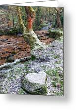 Winter In The Woods Greeting Card by Adrian Evans
