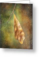 Winter Is Coming Greeting Card by Brenda Bryant