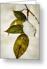 Winter Leaves And Snow Greeting Card by Julie Palencia