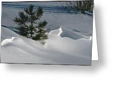 Winter Light Greeting Card by Kae Cheatham