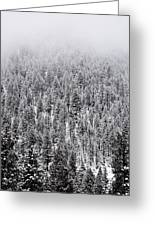 Winter Pines Greeting Card by The Forests Edge Photography - Diane Sandoval