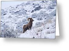 Winter Ram Greeting Card by Mike  Dawson