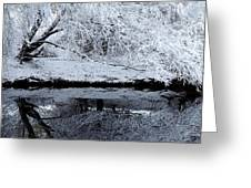 Winter Reflections Greeting Card by Steven Milner