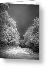 Winter Road Greeting Card by John Haldane