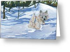 Winter Romp Greeting Card by Molly Poole