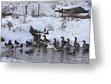 Winter Swimming Hole Greeting Card by Deborah Benoit