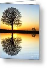 Winter Tree Reflections Greeting Card by Tim Gainey