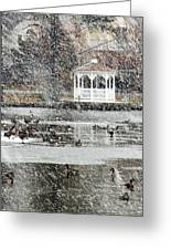 Wintering Ducks On Silver Lake Greeting Card by Kim Bemis