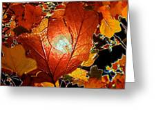 winters autumn in Pasadena Greeting Card by Kenneth James