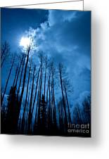Winters Sky Greeting Card by Dana Kern