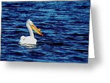 Wisconsin Pelican Greeting Card by Thomas Young
