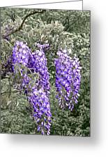 Wisteria Blossom Clusters Abstract Greeting Card by Byron Varvarigos