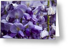 Wisteria Greeting Card by Michael Friedman