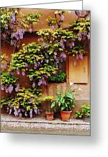 Wisteria On Home In Zellenberg 4 Greeting Card by Greg Matchick