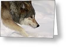 Wolf Dreams Greeting Card by Inspired Nature Photography By Shelley Myke
