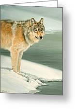 Wolf Portrait-lamar Valley Greeting Card by Paul Krapf