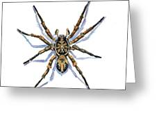 Wolf Spider Greeting Card by Katherine Miller