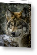 Wolf Upclose 2 Greeting Card by Ernie Echols