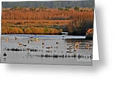 Wonderful Wetlands Greeting Card by Al Powell Photography USA