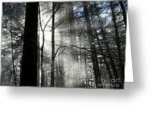 Wondrous Light Greeting Card by Avis  Noelle