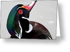 Wood Duck Drake Greeting Card by Bob and Jan Shriner