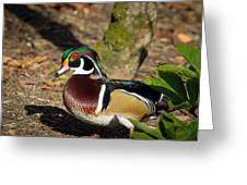Wood Duck In Hiding Greeting Card by Steve McKinzie