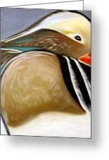 Wood Duck  Greeting Card by Nicoletta Filarski