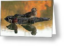 Wood Ducks Greeting Card by Dale Kincaid