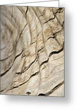Wood Grain Grunge And Texture Greeting Card by Hermanus A Alberts