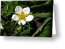 Wood Strawberry Greeting Card by Christina Rollo