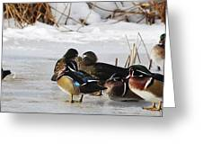 Woodies On Ice Greeting Card by Thomas Pettengill