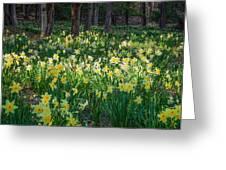 Woodland Daffodils Greeting Card by Bill Wakeley