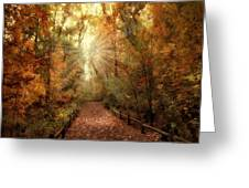 Woodland Light Greeting Card by Jessica Jenney