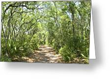 Woodland Path Greeting Card by Glennis Siverson
