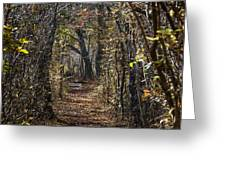 Woodland Path Greeting Card by John Greim