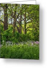 Woodland Phlox 2 Greeting Card by Steve Harrington