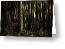 Woods Greeting Card by Mario Celzner