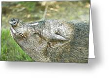 Woody Smiles Greeting Card by Artist and Photographer Laura Wrede