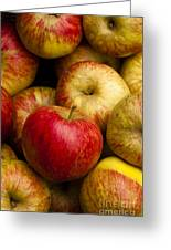 Worcester Pearmain Greeting Card by Anne Gilbert