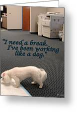 Working Dog Greeting Card by Mary Beth Landis