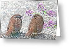 Wren Bird Sweethearts Greeting Card by Jennie Marie Schell