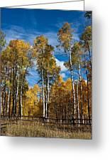 Wyoming Golden Fall Aspens Greeting Card by John Haldane